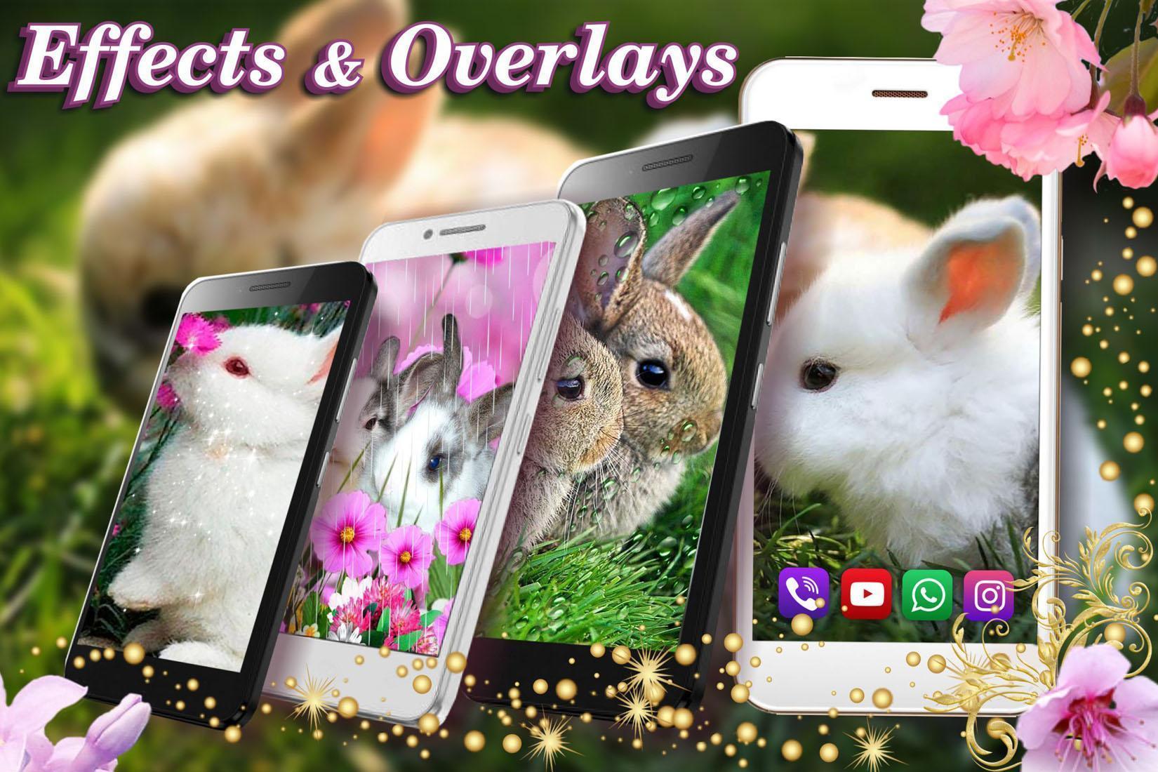 Funny Bunnies live wallpaper 5 تصوير الشاشة