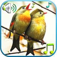 الطيور الأصوات والنغمات on 9Apps