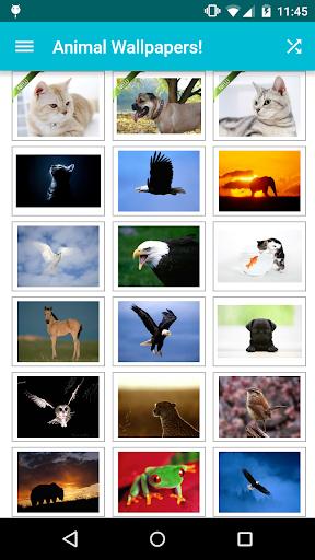 Animal Wallpapers! screenshot 1