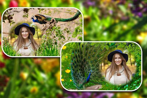 Peacock Photo Frames screenshot 1