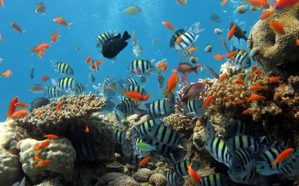 Ocean Fish Live Wallpaper ? Animated Aquarium screenshot 6