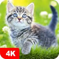 Papéis de parede com gatos 4K on 9Apps