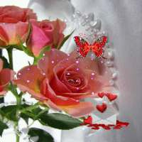 Pink Rose Butterfly LWP on APKTom