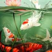 live koi pond wallpaper on 9Apps
