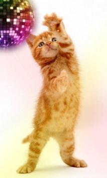 القطط مضحك. الرقص واللعب 6 تصوير الشاشة
