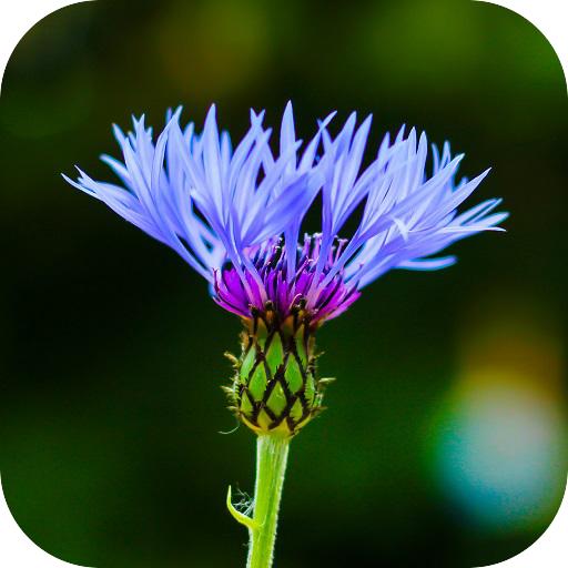 Blur Image - DSLR focus effect أيقونة