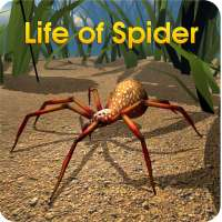 Life of Spider on 9Apps