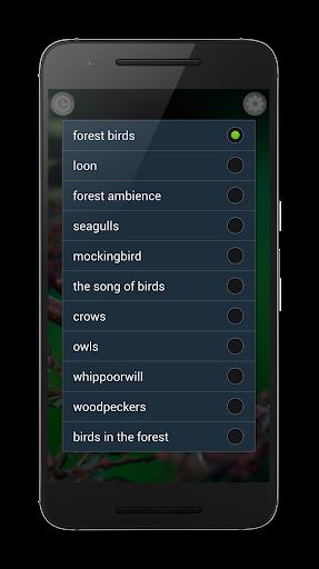 Birds Sounds Relax and Sleep screenshot 3