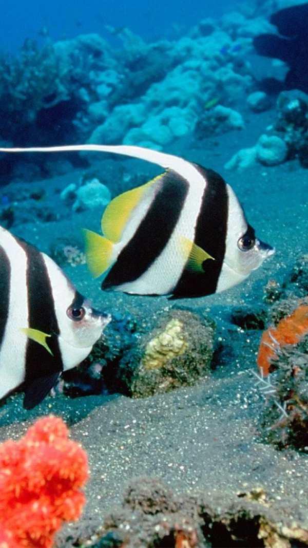 Ocean Fish Live Wallpaper ? Animated Aquarium screenshot 2