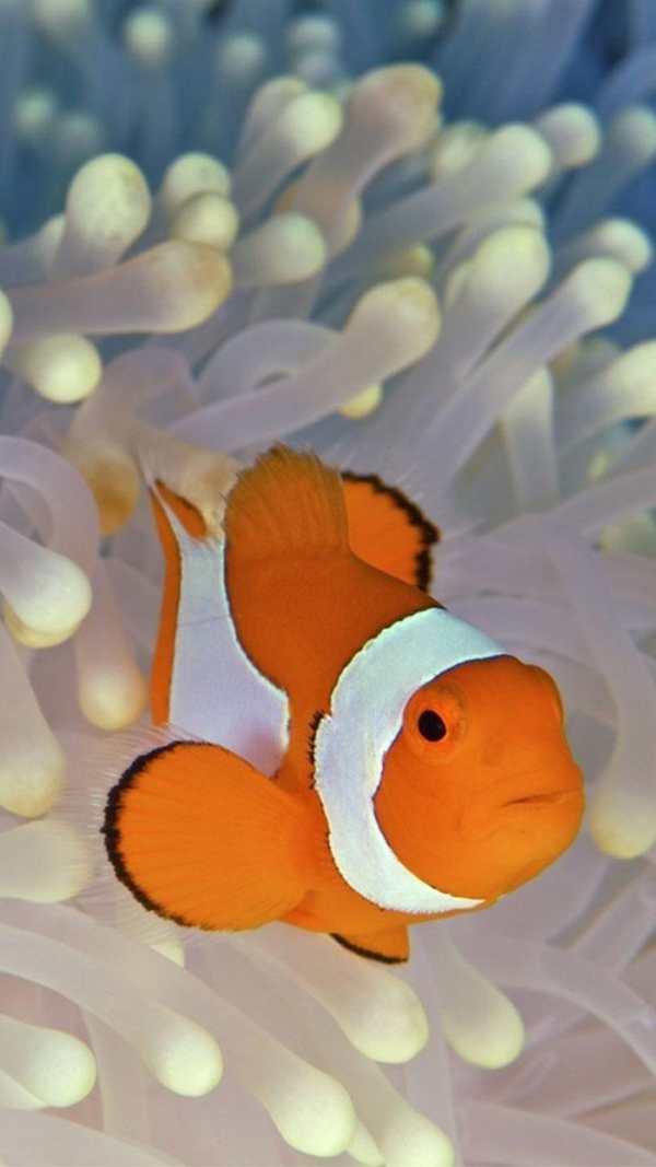 Ocean Fish Live Wallpaper ? Animated Aquarium screenshot 3