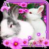 Funny Bunnies live wallpaper أيقونة