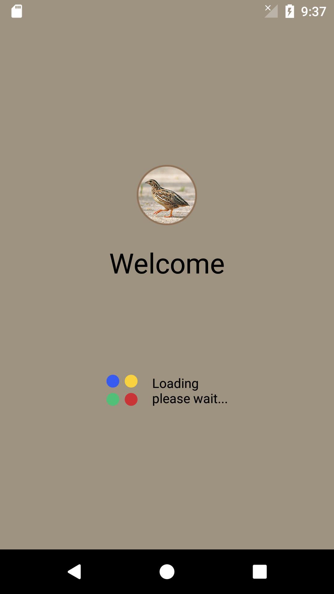 Quail Bird (Animal) Sounds screenshot 1