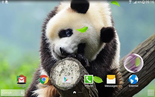 Cute Panda Live Wallpaper screenshot 7