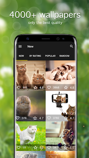 Cat Wallpapers & Cute Kittens screenshot 1