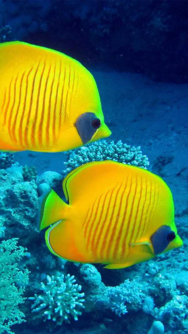 Ocean Fish Live Wallpaper ? Animated Aquarium screenshot 4