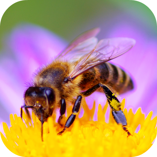 Bee Sounds icon