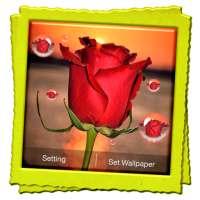 3D Rose Live Wallpaper on 9Apps