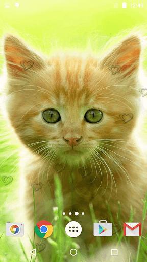 جذاب القطط خلفيات حية 2 تصوير الشاشة