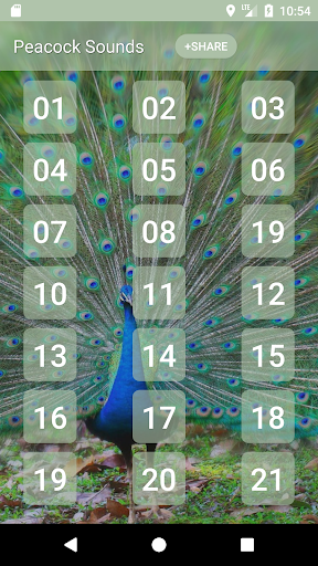 Peacock (Animal) Sounds 1 تصوير الشاشة