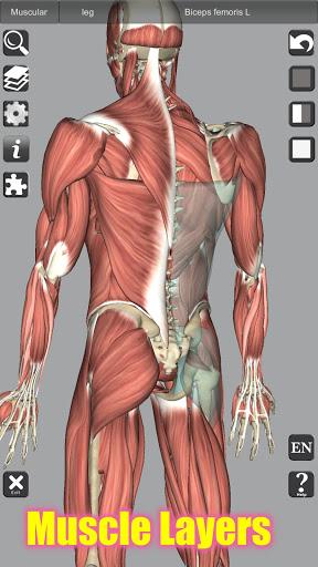 3D Bones and Organs (Anatomy) 3 تصوير الشاشة