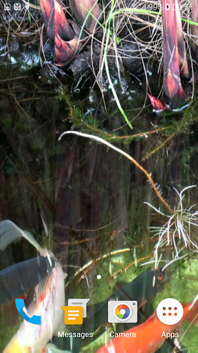 Koi Video Live Wallpaper FREE 4 تصوير الشاشة
