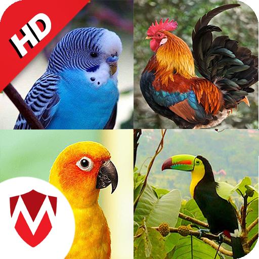 ikon 100 suara burung: nada dering, wallpaper