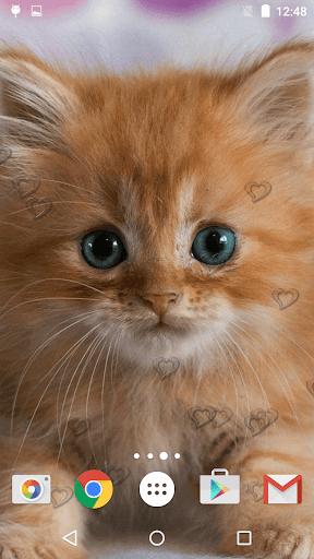 جذاب القطط خلفيات حية 1 تصوير الشاشة