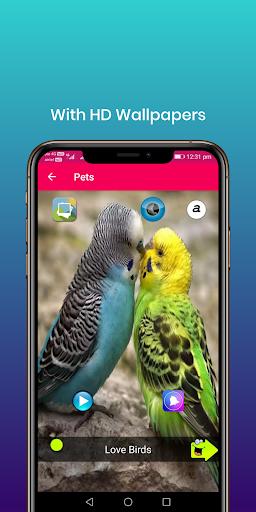 100 suara burung: nada dering, wallpaper screenshot 2