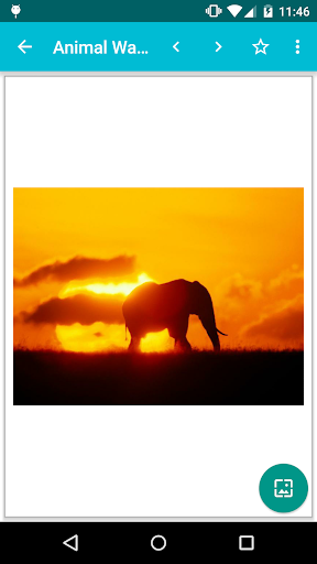 Animal Wallpapers! screenshot 2
