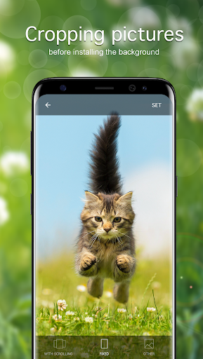 Cat Wallpapers & Cute Kittens screenshot 3