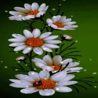 White Flowers Beauty LWP on 9Apps