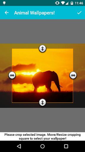 Animal Wallpapers! screenshot 3