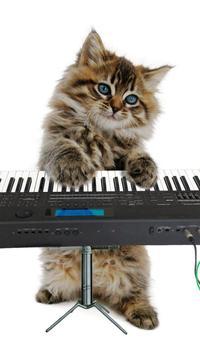 القطط مضحك. الرقص واللعب 12 تصوير الشاشة