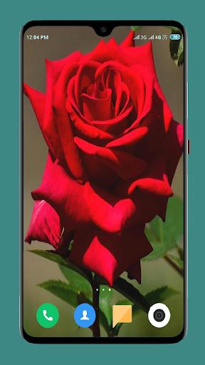 Flowers Wallpaper 4K screenshot 8