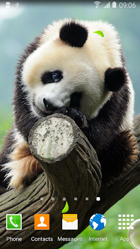 Cute Panda Live Wallpaper screenshot 1