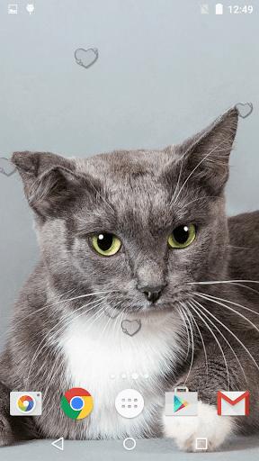 جذاب القطط خلفيات حية 12 تصوير الشاشة