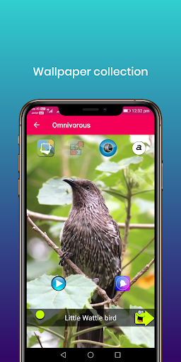 100 suara burung: nada dering, wallpaper screenshot 12