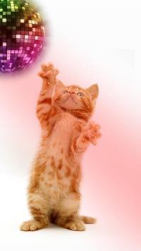 القطط مضحك. الرقص واللعب 14 تصوير الشاشة
