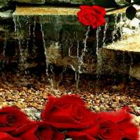 Rose Waterfall Live Wallpaper on APKTom