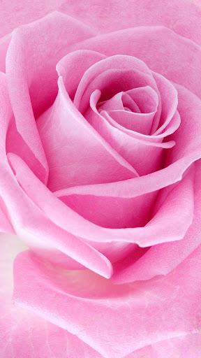 وردي  الوردة للجدران لايف 5 تصوير الشاشة