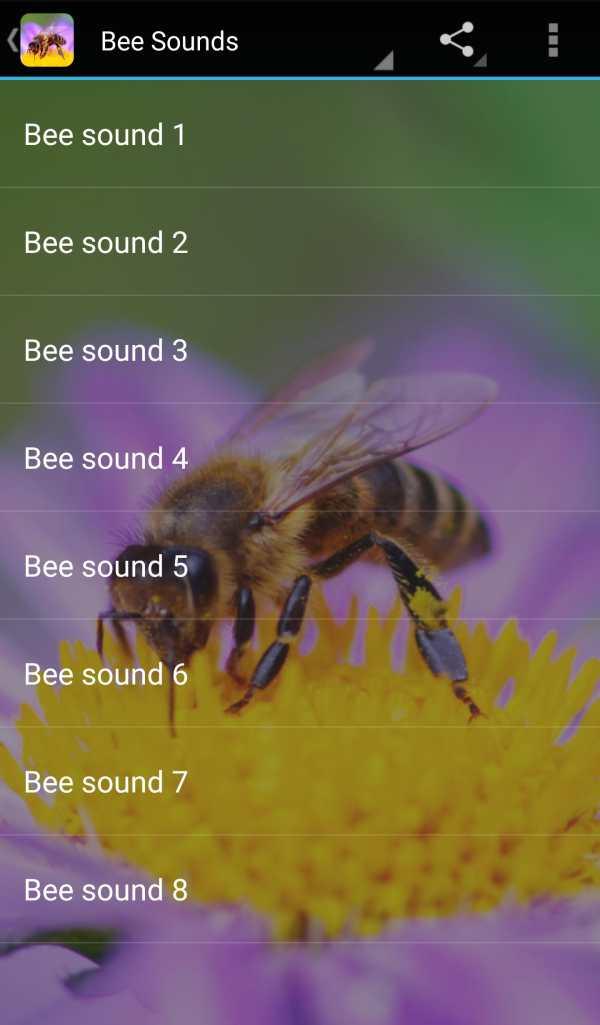 Bee Sounds screenshot 1