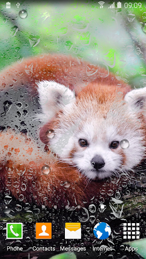 Cute Panda Live Wallpaper screenshot 4