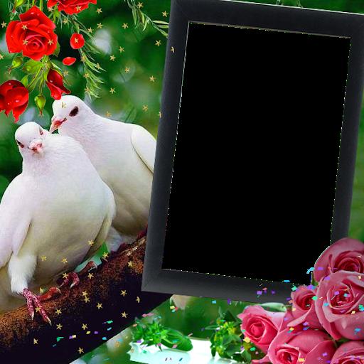 Love Birds Insta DP : Bird DP Frames & Wallpapers screenshot 3