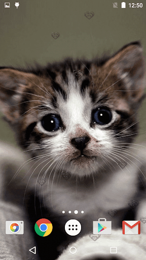 جذاب القطط خلفيات حية 7 تصوير الشاشة