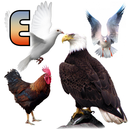 Birds name in English icon