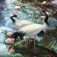 White Birds Live Wallpaper on APKTom