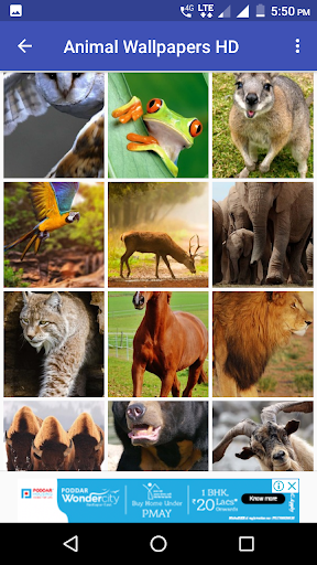 Animal Wallpapers HD 3 تصوير الشاشة