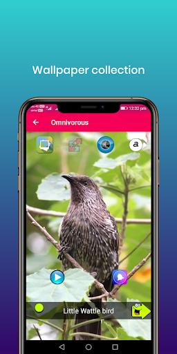 100 suara burung: nada dering, wallpaper screenshot 8