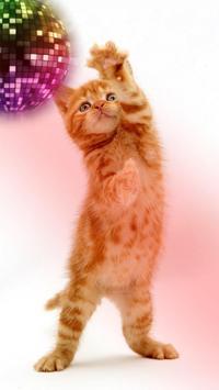القطط مضحك. الرقص واللعب 13 تصوير الشاشة
