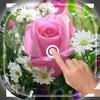 Magic Touch - Pink Rose Flower LWP иконка